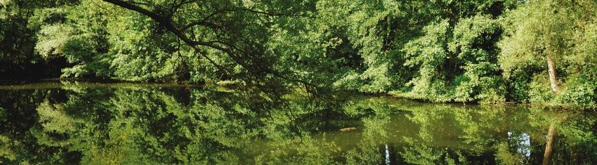 Enquête écologique au Pâquis